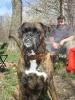 Наша собака